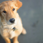 Pets and Divorce: Who gets Fido when you split up?